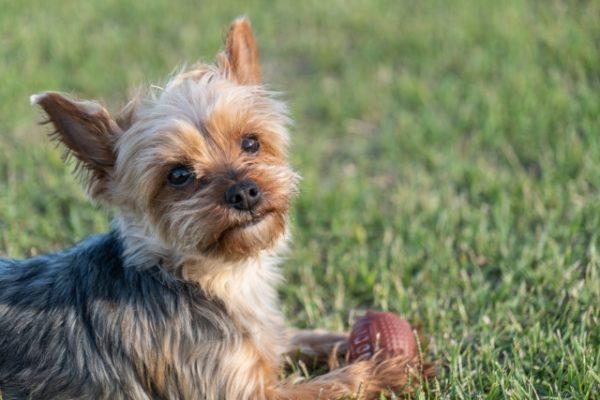 愛犬の遠隔治療の感想